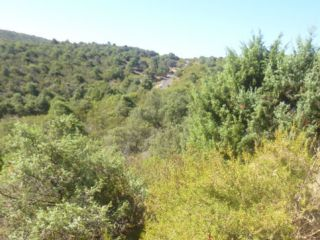 Parcela en Arroyo San Roman, Torremocha de Jarama 3