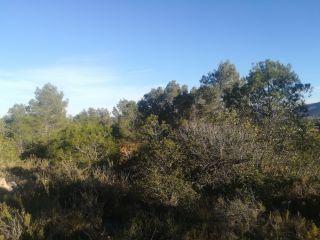 Terreno en La Sotarraña, Chella, Valencia 5