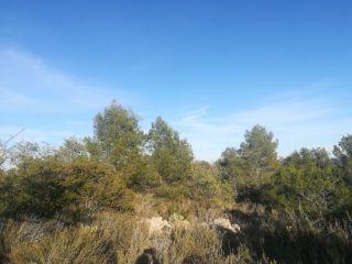 Terreno en La Sotarraña, Chella, Valencia 8